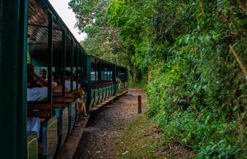Tren Ecológico de la Selva