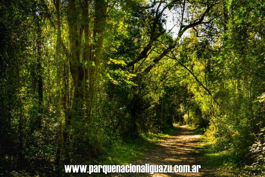flora parque nacional iguazú